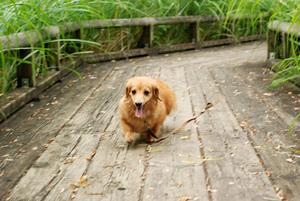 湿地池でのマロン