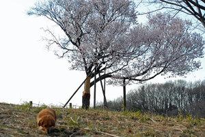 野津田公園にてマロンと散歩
